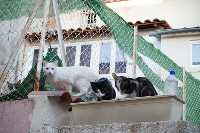 chats de gouttière