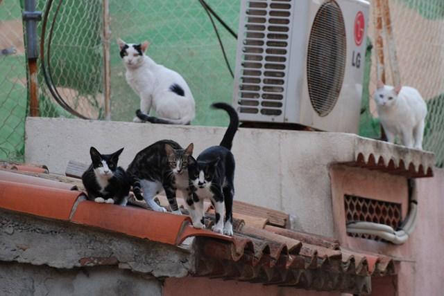 chats de gouttières
