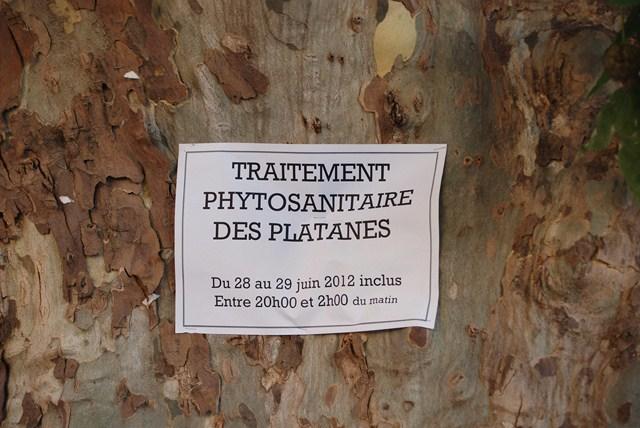 Traitement anti parasitaire des platanes
